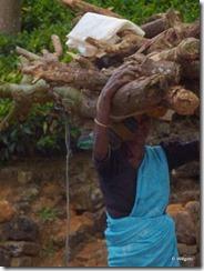 Sri_Lanka_People_gatherWood