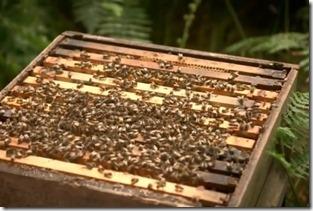 HoneyBeesHive