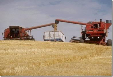 GrainHarvesting2